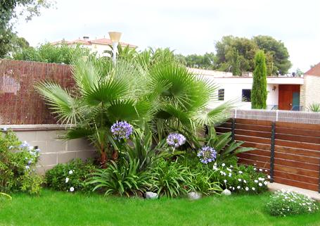 plantas-ideales-para-jardins-pequenos