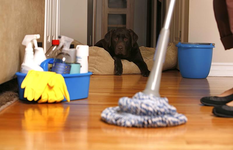 Consejos para la limpieza del hogar y los muebles