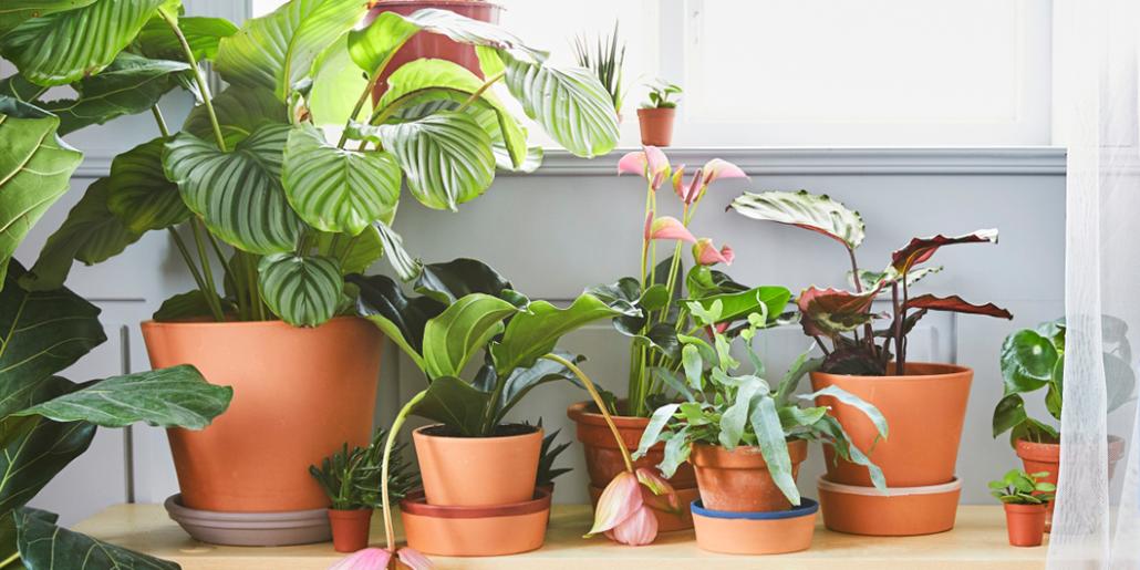 Plantas que nunca debes tener en tu jard n interiores Plantas baratas de exterior